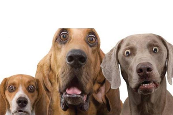 Le stress chez le toiletteur ou le vétérinaire